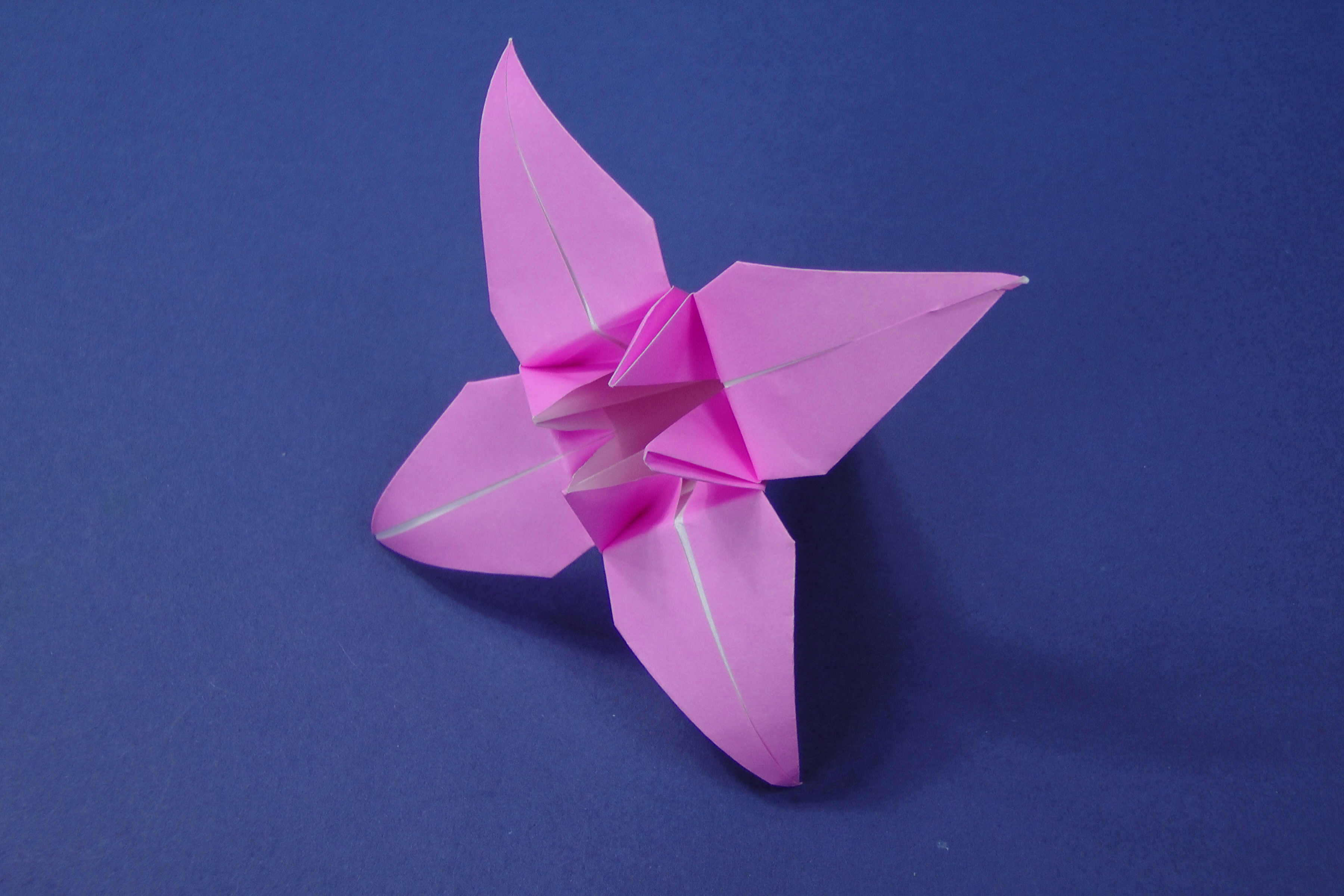Instructions Archives Tavins Origami 3d Animation Diagrams Animated Diagram To Fold A Lily Flower